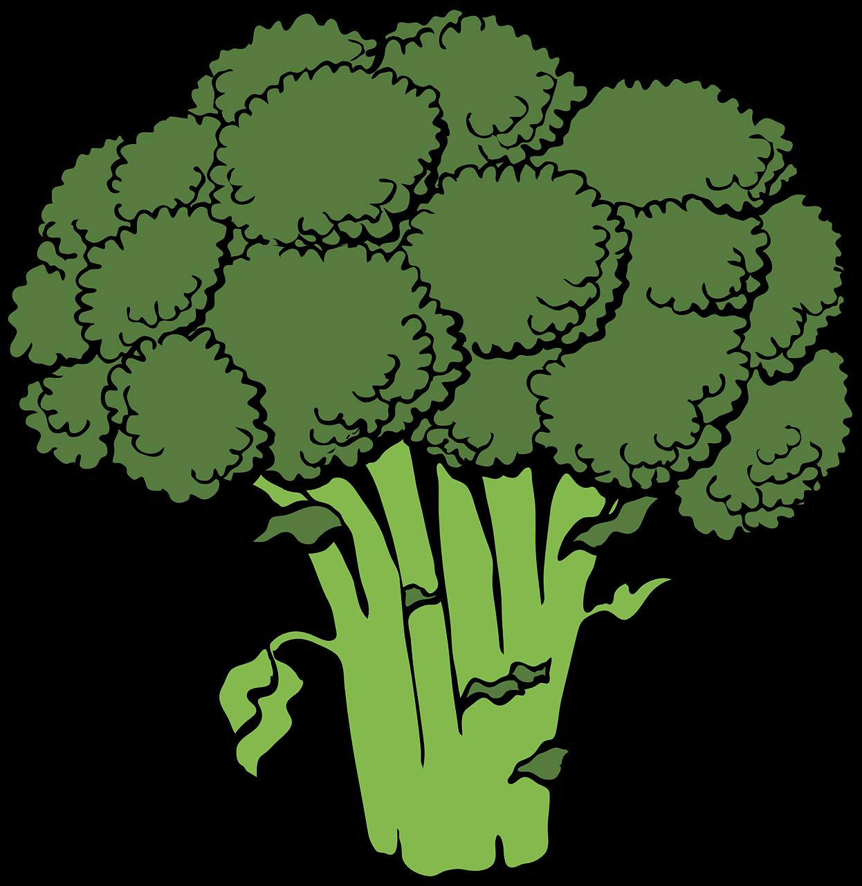 brokkoli-zeichnung