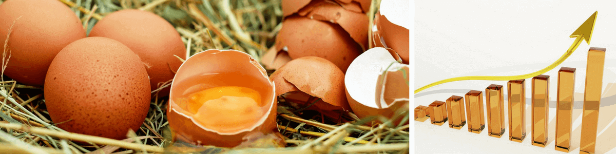 eier-cholesterin