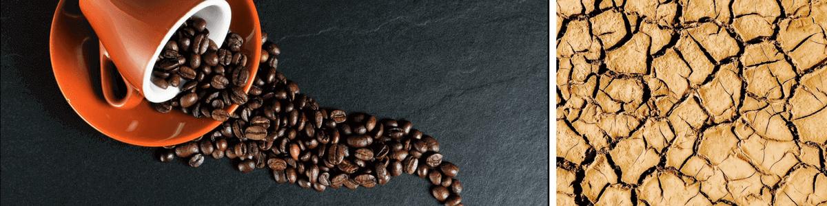kaffee-dehydriert