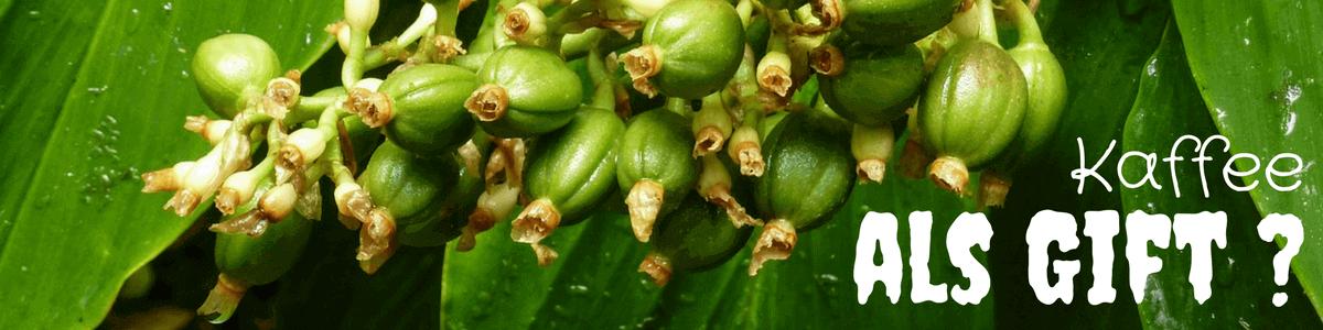 kaffeepflanze-als-gift