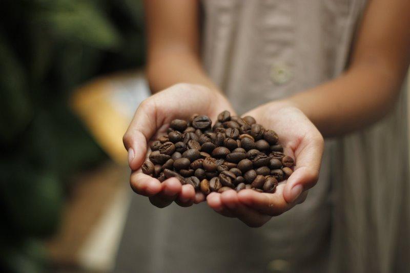 Frische Kaffeebohnen in behüteten Händen